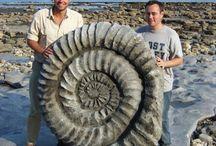 Rocks Stones Fossils / by Jen V