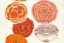 botanical and zoological illustrations / by Judith Lombardi