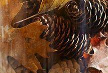Fall Decor. <3 / by Cortney Cornelius