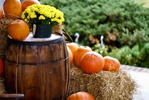 Fallidays / Although I live in Arizona where we have two seasons - hot and gorgeous - my favorite season has always been Fall. Rather than have one board each for Halloween and Thanksgiving, I'm grouping all my favorite fall pics into one category. / by Write | Market | Design
