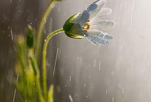 Wildlife, flowers,grass...ext... / by Alyza Bardwell