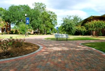 Georgia Southern University / by Nancy Courter