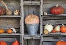 Gourds / by Gail Ledbetter