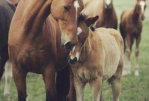 mis animales favoritos / De los animales que mas me gustan / by martita gallardo