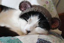 cat-related / by Mareike Engelke