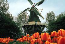 Windmills / by Christine Grier