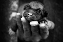 Puppy love / by Alison Adams