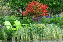 Garden / by Tanya Bechara