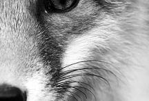 Mr Fox / by Israel García
