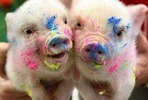 cute critters <3 / by Kiley Ledlow