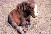 Horses / by Bobbie Stump