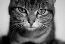 Photographed Cats / by Ev Y