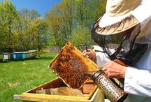 Beekeeper / by Tracey Stone