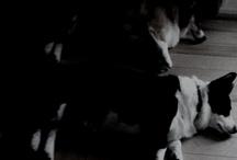 my puppies / by Ruth Stollof