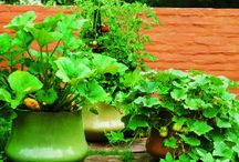 Garden ideas / by Deanne Graves Olivo