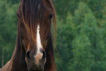 Horses / by Cory Estenger