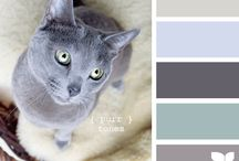 Wedding Color Inspirations / by Beautiful Memories Cinematography