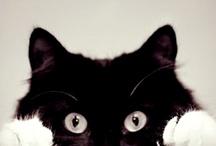 CATS / by Wade Furlong