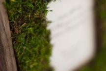 DIY Moss and Flower Crafts / by Jordan Pritchett