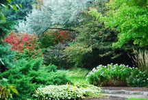 Gardening / by Stealth Flower