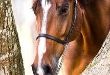 Horses / by Rosana Lopez