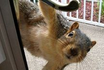 Squirrel World / Some of my best friends are nuts. / by Jody Bergsma