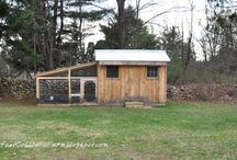 Our Feathered Farm Friends  / Chickens, Coops & Eggs...Ducks, Peacocks, Geese...  / by Jennifer @Flyingkfarmcsa