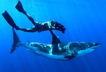 Things I want to do before my last Dive / by Michael Maes