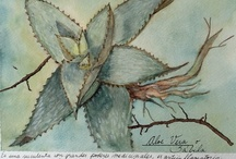 Acuarelas botanicas / by Karin Mengers Correa