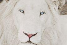 Majestic Wildlife / by Create With Joy *