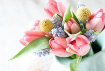 In Bloom / Spring flowers in bloom! / by Dundee Gardens