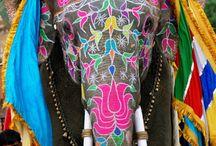 gypsy feet / by Stephanie O'Grady