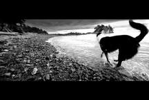 Videos / by Petcurean