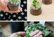 Terrariums / by WhiskeyandKisses