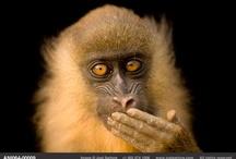 Primates / by Debbie Beals