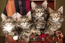 Meow Meow / Cats / by Jennifer Imes