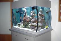 Reef Aquarium / by Barb Ridenour