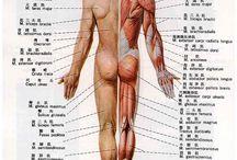 Anatomy / by Linda Elliott
