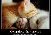amixas x siempre  / by ♥claudyta♥ (tu emoxita)