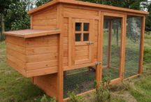 Building a Chicken Coop / by Katherine Farrer
