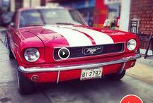 Mustangs  / by Gale Loftus