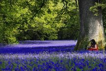 Nature | Daffodils and Bluebells / ...and occasionally Grape Hyacinths. My favourite two flowers separately, but especially together. / by Merry