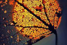 Autumn Colors / by Jeannie Dellinger