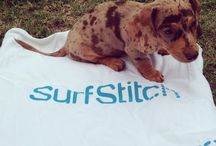 SurfStitch on Instagram / Posts from our Instagram account / by SurfStitch