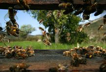 Bees / bees, beekeeping, skep, images, products, honey, hives, printables / by Wendy Finch
