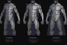 Anatomy / by Thomas Chun