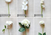 Color: White  / by Rose of Sharon Floral Designs, Althea Wiles