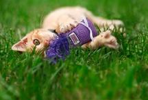 Cats Love KONG / by KONG Company