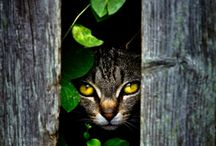 Animals ~ Cats ♥ / by SE Ⓥ Grl