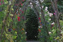 gardening ideas / by Susie Neider